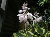 夏の庭・紫 - rhizome2-地下茎-