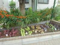 葉っぱ(ヒューケラ)植えました。 - 台町公園ブログ