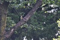 アオゲラ・・・ - 鳥と共に日々是好日