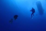 19.7.24天候・海況、バツグン! - 沖縄本島 島んちゅガイドの『ダイビング日誌』