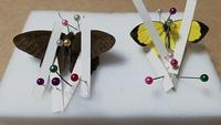 昆虫の飛んでいるときの翅の動きについて - むしジオラマ -ほか自分流園芸、自分流工作など-
