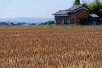 麦畑からの便り - katsuのヘタッピ風景