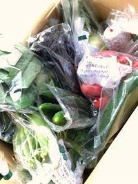 北海道の夏野菜届く&新著書進行状況 - こんなことが、あったよ。