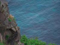 ウミガラスとの邂逅~夏の北海道探鳥と登山、丘巡り⑤ - ひとり野鳥の会
