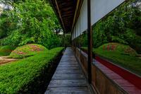 ツツジ咲く雲龍院 - 花景色-K.W.C. PhotoBlog