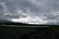 八ヶ岳高原を散歩⑨ - 光画日記2