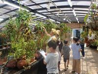 「夏休み植物画展」開催のご報告ヾ(≧▽≦)ノ - 手柄山温室植物園ブログ 『山の上から花だより』