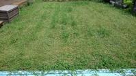 クラピア刈り続き - うちの庭の備忘録 green's garden