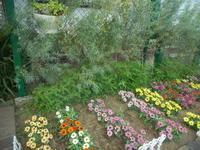 ナガエコミカンソウ - 台町公園ブログ