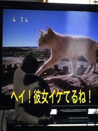 にゃんこ劇場「ヘイ!カノジョ!」 - ゆきなそう  猫とガーデニングの日記