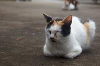 ミケちゃん - ネコと裏山日記