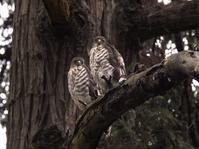 兄弟 - Wild Birding
