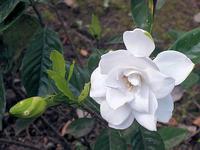 花と盆栽 - しらこばとWeblog