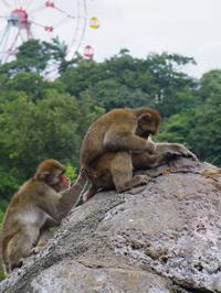 毛づくろい[みさき公園] - a diary of primates
