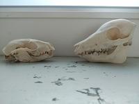 骨は語る。 - 古道具ときどき猫。
