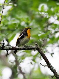 野鳥が元気な戦場ヶ原 - コーヒー党の野鳥と自然 パート2