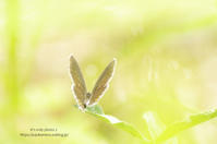 *Butterfly* - It's only photo 2
