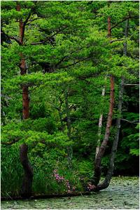 初夏のグリーン - HIGEMASA's Moody Photo