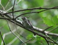幼鳥たち、、その2, - ぶらり探鳥