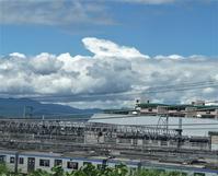 台風と百合の不思議 - hibariの巣