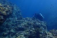 19.7.27最高の海遊び日和! - 沖縄本島 島んちゅガイドの『ダイビング日誌』