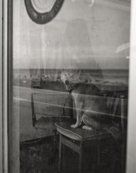 海へ行きたい。 - Picture In A Frame