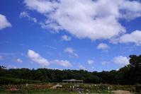 今日の空とサボテンの花 - さんじゃらっと☆blog2