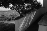 合歓の木陰 - フォトな日々