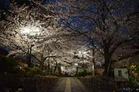 宝塚・花のみちの桜 - ブルーアワーの街の情景