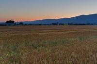 黄金(こがね)に光る麦畑 - katsuのヘタッピ風景