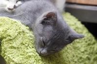 グレイちゃん - ネコと裏山日記
