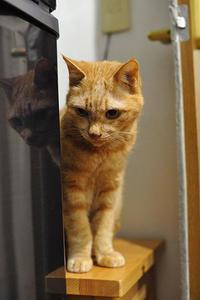 3代目ミルサー買いました。猫の強制ご飯に欠かせないミルサー。&パトロール - ほんじつのトムさん