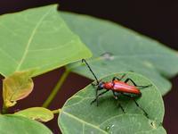 勝尾寺園地虫達、彩都粘菌 - 不定期更新 彩都付近の自然観察日記
