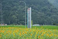 ひまわり畑 - 今日の空+α2