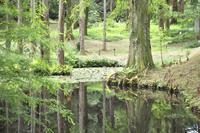「メタセコイアの森」 - hal@kyoto