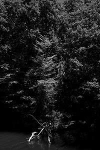 池の畔 - 節操のない写真館