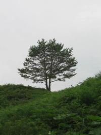 Prinzip des 3 Neinismus - san mu shugi - Hommage an die japanische Ästhetik im Alltag und einfach umsonst...