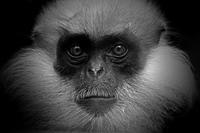 ラングール - 動物園の住人たち写真展(はなけもの写眞店)