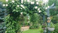 暑過ぎる庭で咲く - 今から・花