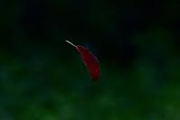 落葉~最近のウトナイ湖 - やぁやぁ。