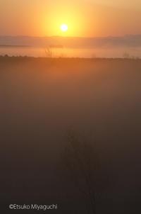 霧朝の日の出 - ekkoの --- four seasons --- 北海道