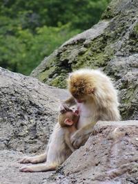 母と子たち[みさき公園] - a diary of primates