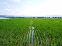 熊本県菊池市七城町『砂田のこだわりれんげ米』父から子へこだわりの無農薬栽培です。成長の様子2019 - FLCパートナーズストア