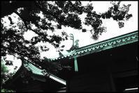 湯島 -22 - Camellia-shige Gallery 2