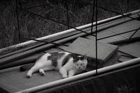 暑いし眠いし - フォトな日々