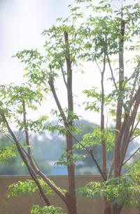 7/28花木の剪定 - 「あなたに似た花。」