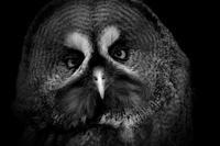 カラフト - 動物園の住人たち写真展(はなけもの写眞店)