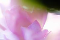 一輪だけ咲いた薔薇 - 一人の読者との対話