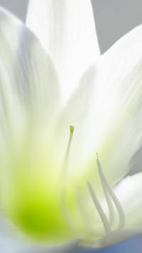 百合の花(その3) - 一人の読者との対話