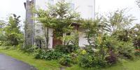 雑木の庭初夏の庭仕事 - 成長する家 子育て物語
